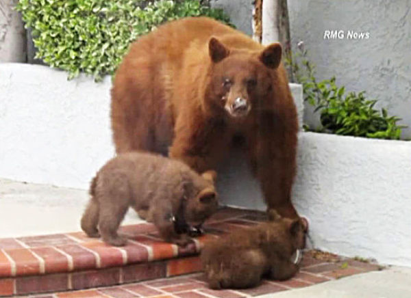 The Bears Are Taking Over (11 pics)