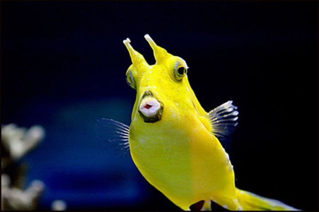 The Fish with Human Face Expressions (30 pics)