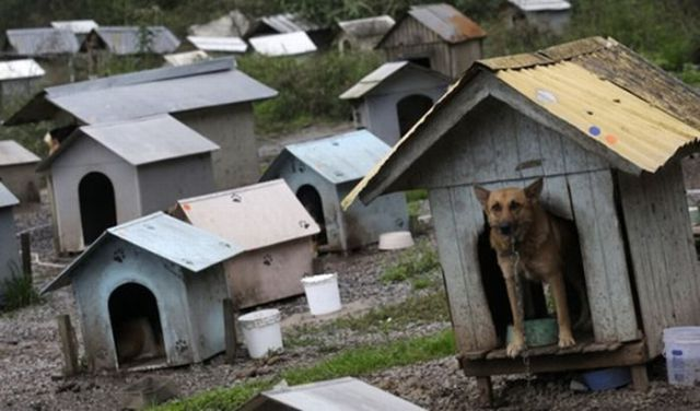Dog Slums (7 pics)