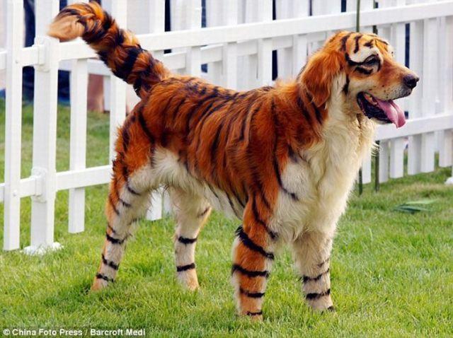 Wild Animal Look Alikes (16 pics)