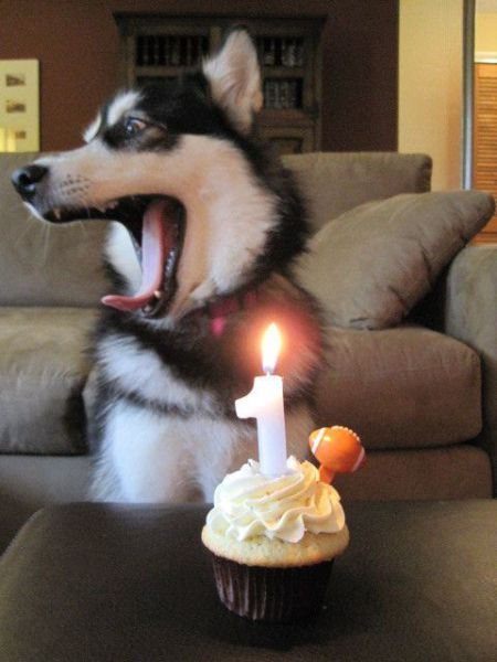 These funny animals (54 pics)