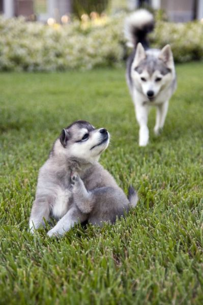These funny animals (56 pics)