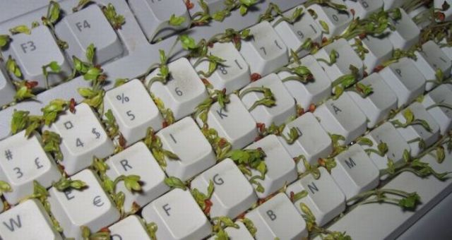 How to Make Your Keyboard Eco-Friendly (8 pics)