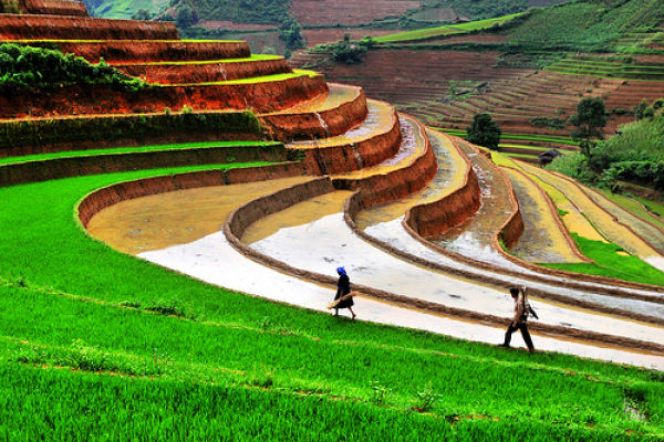 The Most Beautiful Terraced Rice Fields (36 pics)