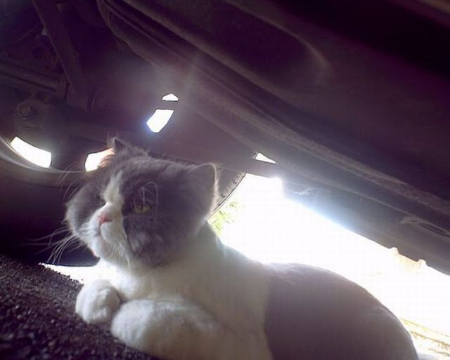 Life Seen from a Cat's Point of View! (75 pics)