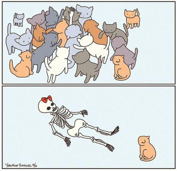 Kitten Nightmares (2 pics)