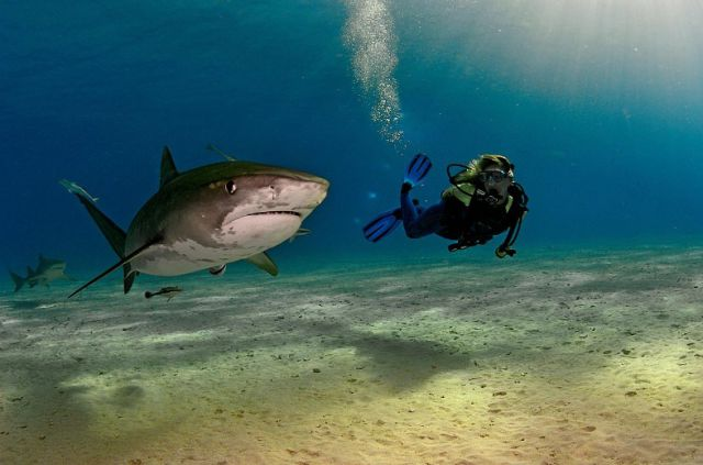 Stunning Underwater Photos (19 pics)