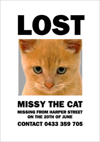 Hilarious Missing Cat Posters (19 pics)