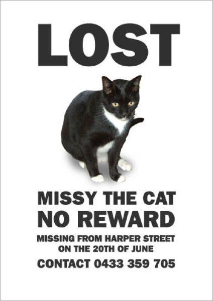 Hilarious Missing Cat Posters (19 pics)
