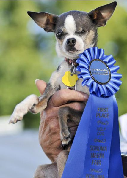 The Ugliest Dog Contest (21 pics)