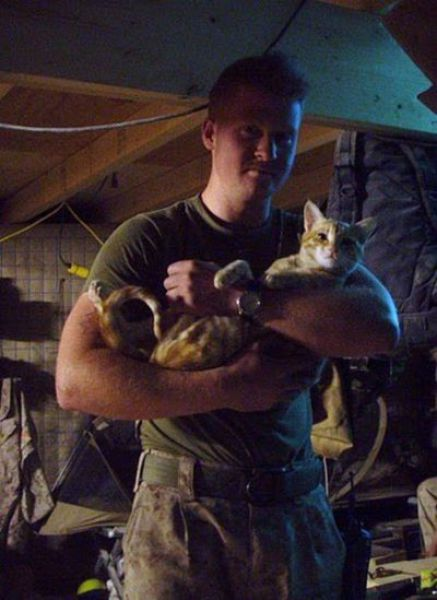 Afghanistan Kittens Move to the USA (21 pics)