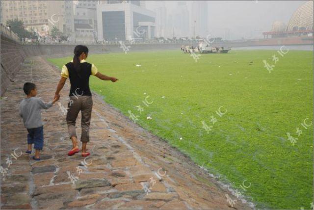 Seaweeds Invasion in China (18 pics)