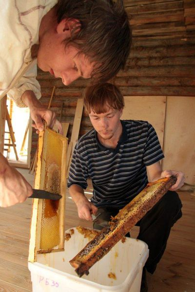 Honey Extraction (21 pics)