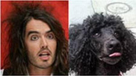 Celebrities and Pets (10 pics)