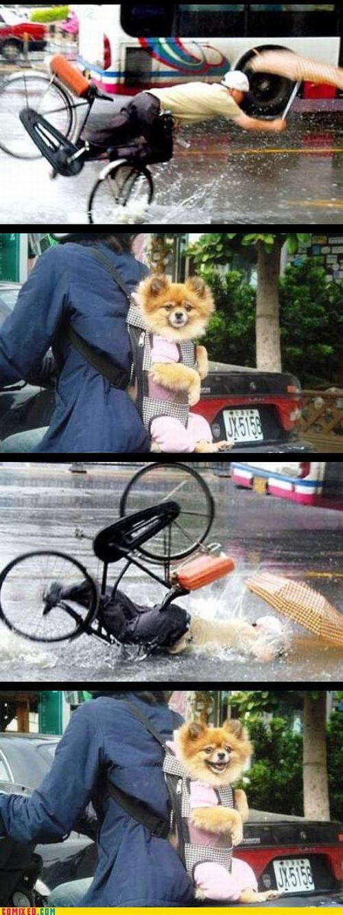 Funny commixed pictures. Part 4 (57 pics)