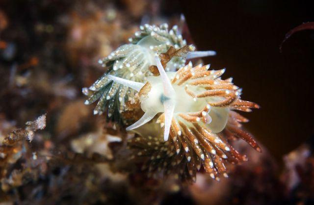 The Wonders of the White Sea (92 pics)