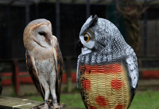 Smiling Owls (21 pics) - Izismile.com