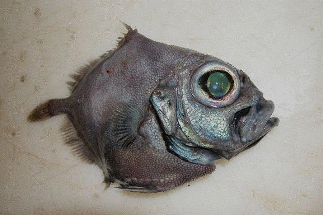 Incredible Sea Inhabitants (25 pics)