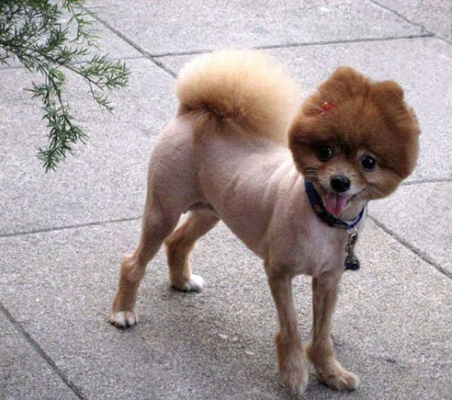 Best Dog Haircuts