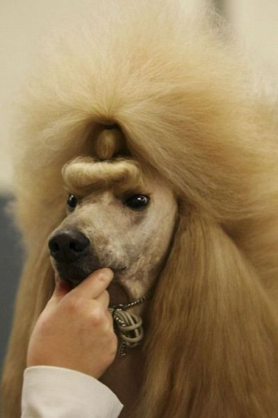 Hilarious Dog Haircuts 49 pics Izismilecom