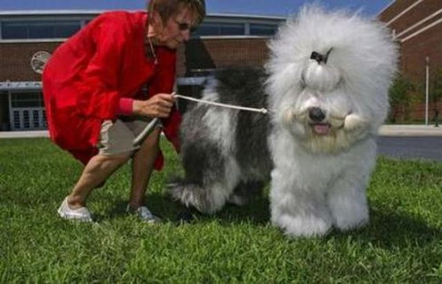 Hilarious Dog Haircuts (49 pics)