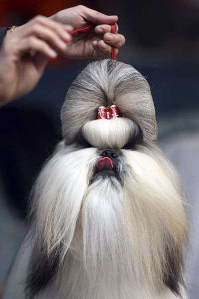 Hilarious Dog Haircuts 49 Pics Izismile Com
