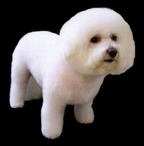 Hilarious Dog Haircuts 49 Pics Izismile Com