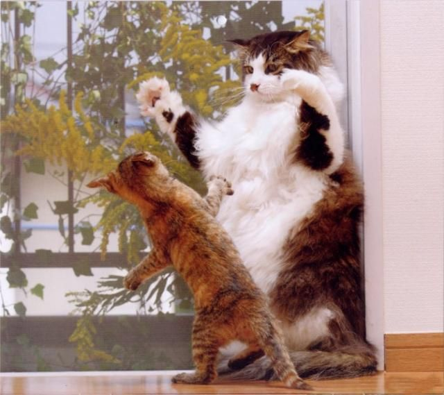 These funny animals (47 pics)