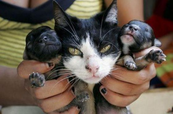 A Cat Delivers a Puppy? (6 pics)