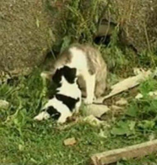 A Cat Delivers a Puppy? (6 pics)