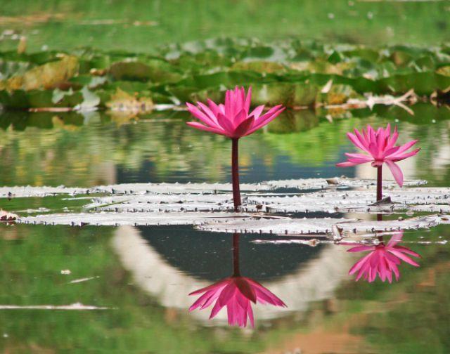 Striking Reflective Photography (30 pics)