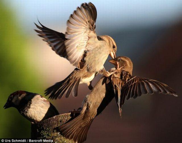 Kung Fu, Birds Style (8 pics)
