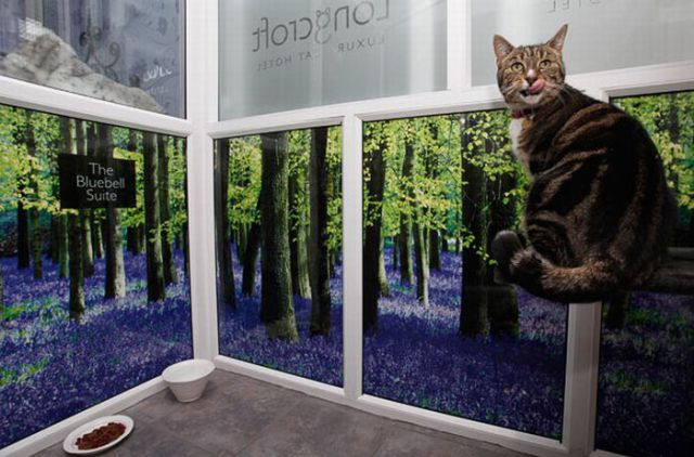Luxurious Hotel for Cats (14 pics)