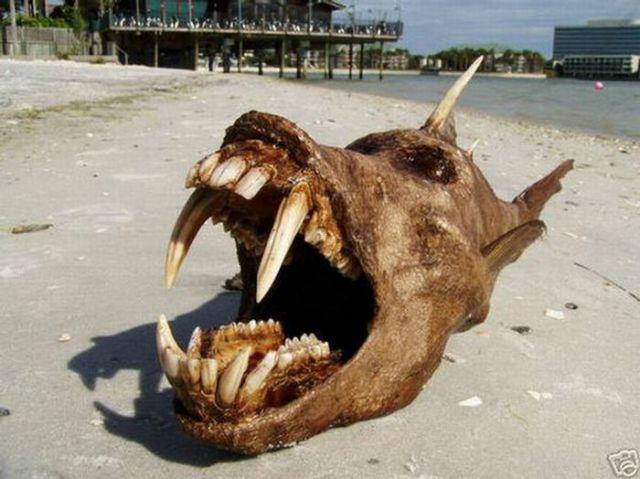 The Weirdest Creatures Ever Found (17 pics)