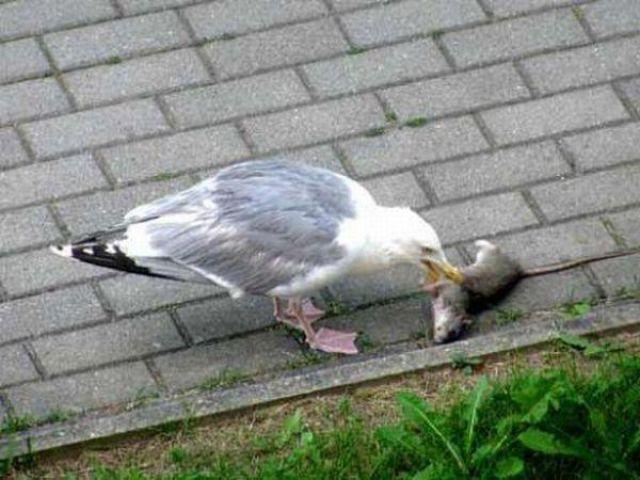 Birds with Vivid Imagination (9 pics)