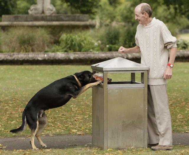 Dog That Picks Up Litter (11 pics)