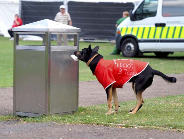 Dog That Picks Up Litter (11 pics)