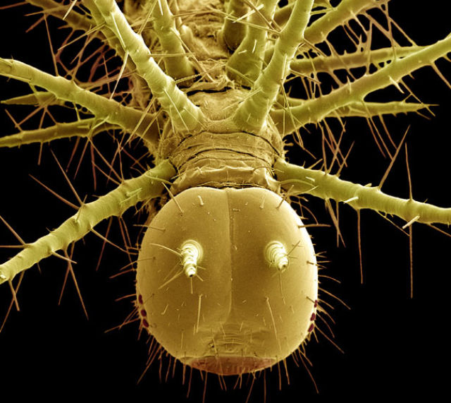 Creepy and Awesome Alien Crawlies (20 pics)