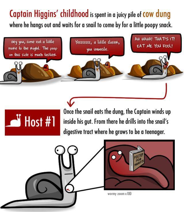 The Life of Captain Higgins (7 pics)