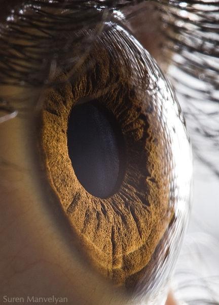 Amazing Eyes (8 pics)