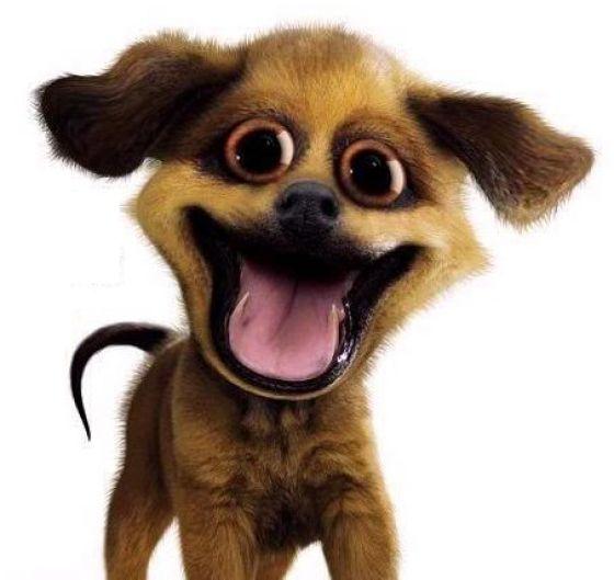 Crazy Pipe Dog !!! (4 pics)