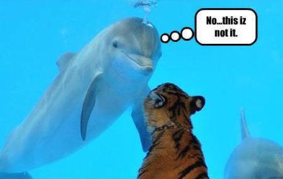 Fishy Smell (5 pics)
