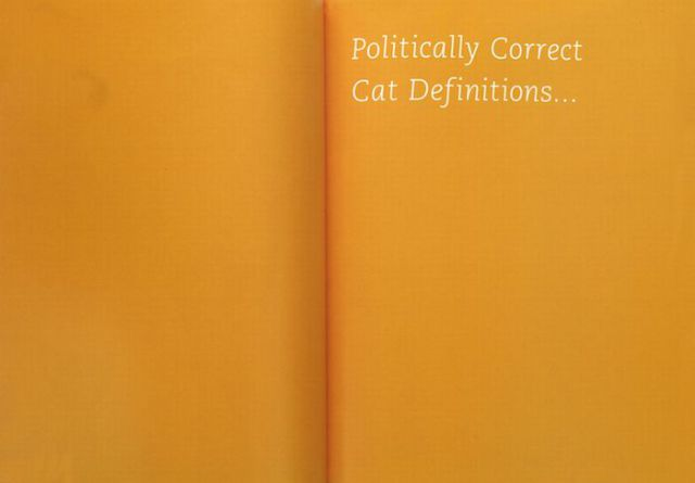 Cat Contortions (81 pics)