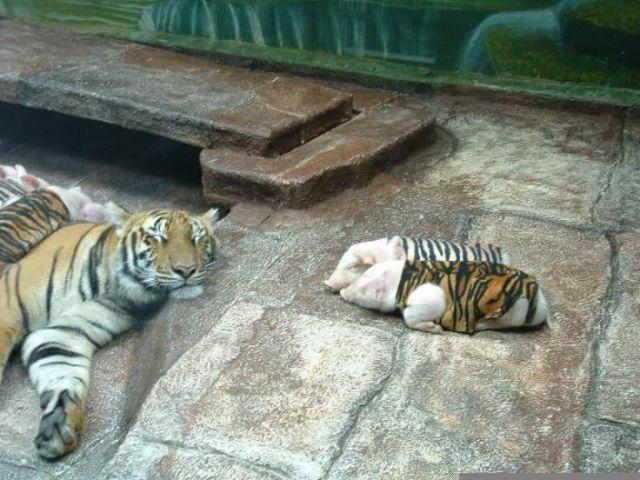 The Maternal Instinct or the Predator Instinct? (4 pics)