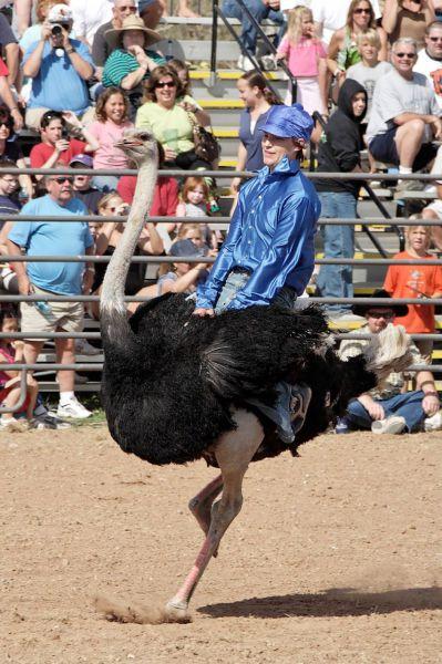 The Ostrich Races (10 pics)