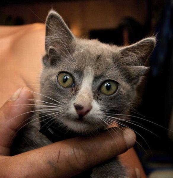 Alien Kitten (10 pics)