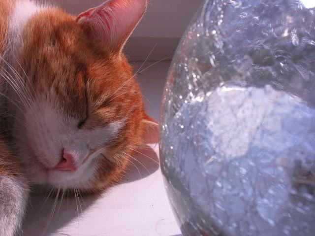 really sweet rusty cat (9 pics)