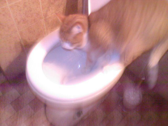thirsty kitty (3 pics)