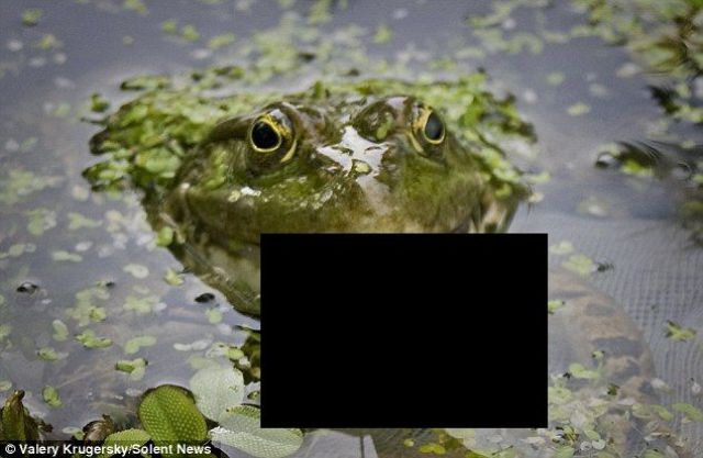Who Knew Frogs Can Eat That! (3 pics)