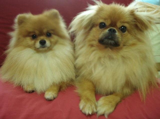 My pupies (16 pics)